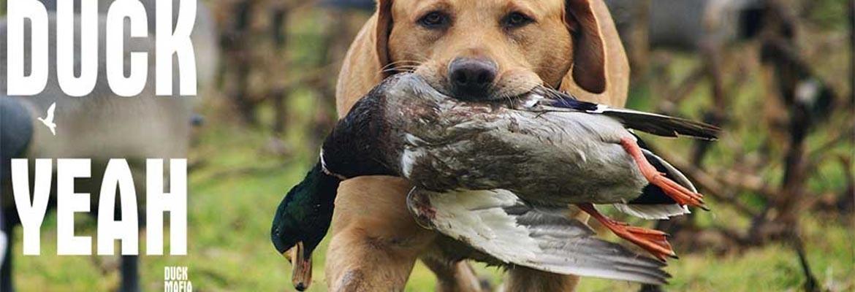 Duck Mafia